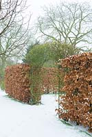 Fagus - Beech hedge with arch for climbers.