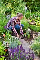 Woman planting Zinnia 'Profusion' and marguerite daisy in vegetable garden to attract wildlife.