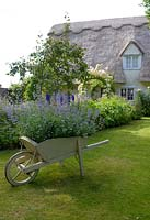 Cottage garden with ornamental wheelbarrow filled with Nepeta - Catmint.