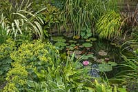 Garden pond with waterlilies and fish.