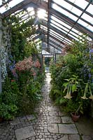 Parham House Glasshouse - looking east with Fuchsia 'Joyce Sinton' left and Brugmansia