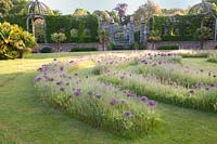 View of labyrinth planted with alliums. Arundel Castle, West Sussex. UK