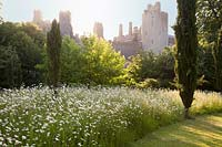Wildflower meadow with mown paths around the castle Garden: Arundel Castle, West Sussex, UK