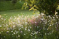 Naturalistic planting of Ox-eye daisies and Ragged Robin. Arundel Castle, West Sussex, UK