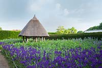 Thatched roundhouse with Phacelia tanacetifolia, and Iris hollandica