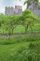Trees underplanted with Alliums with Castle beyond