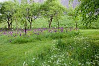 Trees underplanted with Alliums in wild garden