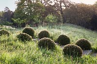 Rows of clipped yew balls on steps in meadow