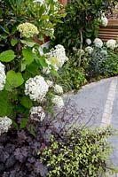 Flowerbed with mixed planting, including Hydrangea arborescens 'Anabelle', Pittosporum tenuifolium and Heuchera 'Plum Pudding'. Designed by Kate Eyre Garden Design.