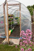Interior of polytunnel, showing mixed planting on staging, shelves and watering cans. Allotment: Wendy Gordon, Well Bean Gardening
