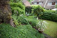 Terraced garden with lawn and oak tree in early summer.