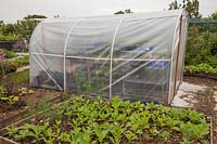 Small polytunnel greenhouse on allotment. Wendy Gordon, Well Bean Gardening.