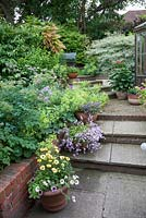 View up a sloping garden with terracotta pots arranged on steps and 