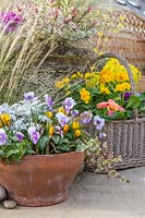 View of mixed container with Viola, Hedera, Senecio maritima, Cyclamen and Crocus 'Zwanenburg Bronze'.