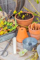 Still life with foraged winter flowers, tools and terracotta pots.