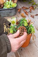 Woman adding pine cone to floral decoration in terracotta pot, with Euphorbia flowers, dried hydrangea and birch catkins.