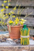 Floral still life, with terracotta pot of winter flowers and Cornus stems wrapped around green glass bottle.