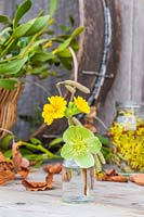 Glass vial with Betula catkins and Hellebore and Primrose flowers.