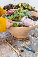Woman adding gravel to succulents in a pot picture in shallow pot