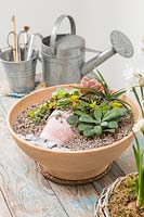Mixed succulents in a pot planted in a shallow container - painting a picture with plants