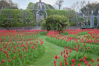 Mown labyrinth planted with display of Tulips with the pergola. Arundel Castle, West Sussex, UK