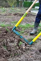 Aerating soil with a broadfork in winter