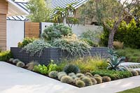 Bed planted with succulents and cacti in front garden. Garden designed by Falling Waters Landscape, inc Ryan Prange, New Port Beach, California, USA.