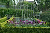 Enclosed vegetable garden with beds edged with Buxus - box - and containing rows of Tulipa - tulips - and 