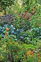 Beneficial companion planting of flowers, herbs and vegetables. 