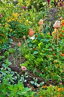 Raised beds with vegetables in amongst flowers and herbs in a potager style.