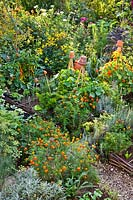 Raised beds with potager style includes vegetables alongside beneficial flowers: French marigolds, 