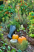 Display of harvested pumpkins, boots and spade in raised beds with potager style planting