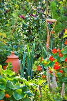 Potager vegetable bed with mixture of vegetables such as leeks and flowers such as