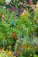 Mixed planting of herbs, vegetables and flowers. Plants include: nasturtium up wigwam supports, Tagetes - 