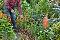 Man standing on path using long-handled tool in raised bed with potager-style planting