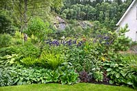 Large border to rear of house including Pulmonaria, Bergenia. Crocosmia, Rudbeckia, Aconitum, Paeonia, Heuchera, Sedum and Syringa.