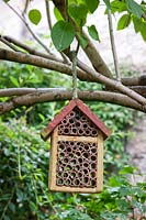 Insect hotel hanging from the branch of a Syringa - Lilac