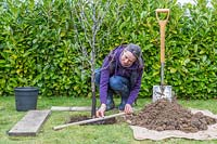 Woman using wooden stake to check pot-grown Malus domestica - apple - tree is 