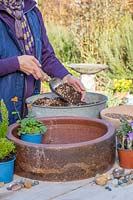 Woman mixing compost and grit for alpine planter.