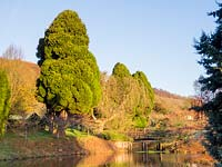 Large evergreen trees provide a dramatic green over the lake.