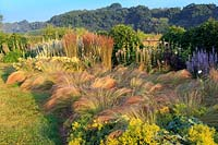 Early morning sunshine on the Ghost border, which features planting of Stipa tenuissima, Calamagrostis x acutiflora 'Karl Foerster', Alchemilla mollis and Verbascum chaixii 'Album'.