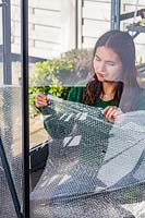 Woman using wooden pegs to fix bubble wrap to inside of greenhouse to provide insulation against the cold winter weather.