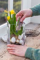 Woman creating a simple Easter display in a glass vase with Narcissus 'Tete a Tete' and Muscari.