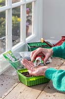 Woman pouring seeds into hand before sowing in plastic trays.