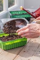 Woman adding thin layer of compost on top of Radish seeds in plastic repurposed seed trays.