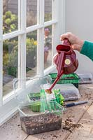 Woman watering pea seeds in recycled tray with watering can.