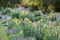 Flower border where irises such as Iris orientalis 'Frigia, Iris spuria