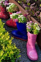 Children's coloured wellie or welly boots planted pink and white Alyssum, on path near raised bed