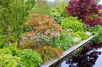 'The Leaf Creative Garden', a mixed planting featuring Acer  - 