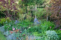 View of packed mixed bed with Berberis x ottawensis, Tulipa, Myosotis - Forget-